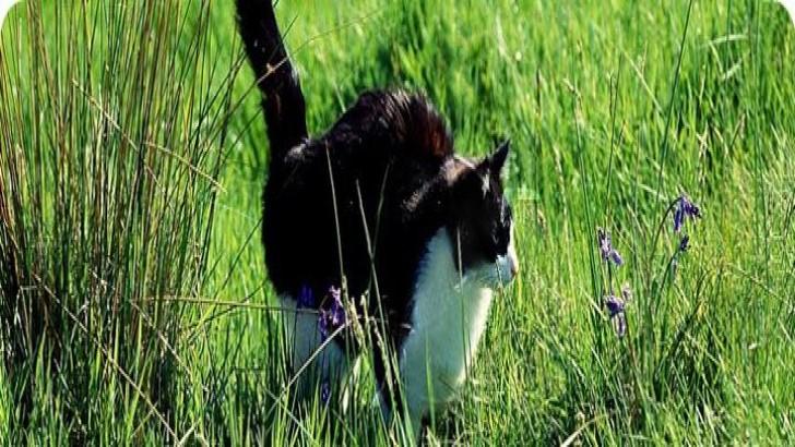 Kedilerin İdrar Püskürtmesini Önlemek