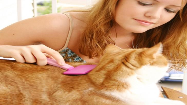 Kedilerin Tüy Bakımı