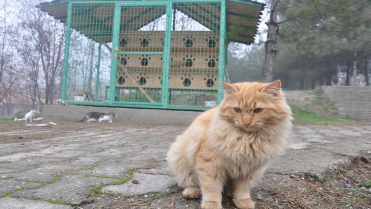 Karabük'te Açılan Kedi Evi
