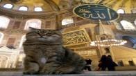 """Ayasofya'nın Sevimli Kedisi """"Gli"""""""