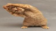 Kedi Sahipleri İçin Pratik Bilgiler