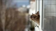 13 Maddede Nankör Bildiğiniz Kedilerden İnsanoğluna Bedava Hayat Dersi
