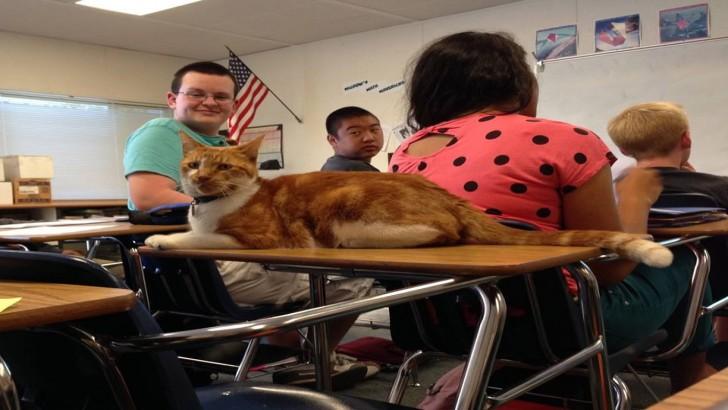 Bu Kedi Gerçek Bir Liseli: İşte Karşınızda Derslere Giren Öğrenci Kedi Bubba!