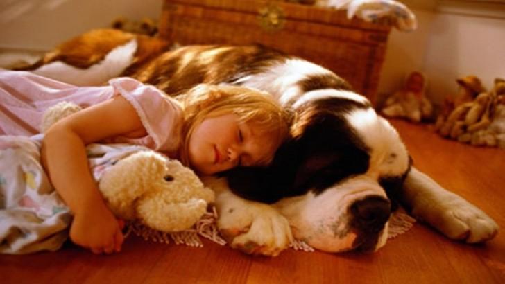 Çocukken Evde Kedi-Köpek Beslemesine Ailesi İzin Vermeyenlerin Anlayacağı 12 Şey