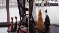 Dostluklarını Yıllarca Esirgemeyen Kedilerin 15 Öncesi-Sonrası Fotoğrafı
