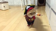 Giydiği Korsan Kıyafeti ile Aşırı Tehditkar Gözüken Şapşik Kedi