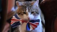 İngiltere'de Bakanlık 'Kedi Kadrosu' Açtı