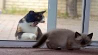 Kapıda Kalınca Çılgına Dönen ve İçeriye Alınmayı Bekleyen 19 Sevimli Kedi