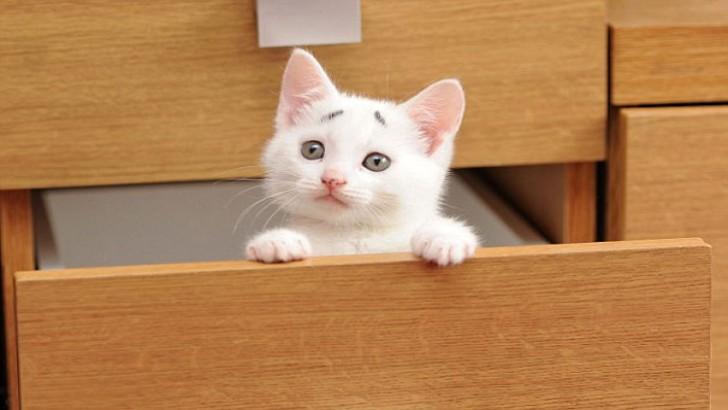 Karşınızda 13 Aşırı Kaygılı Pozuyla Dünyanın En Endişeli Kedisi