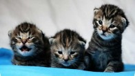 Kedi ve Köpekleri Kısırlaştırmak İstemeyen İnsanların Savunduğu 14 Sebep