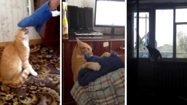 Kedileri Neden Kızdırmamamız Gerektiğinin Kanıtı