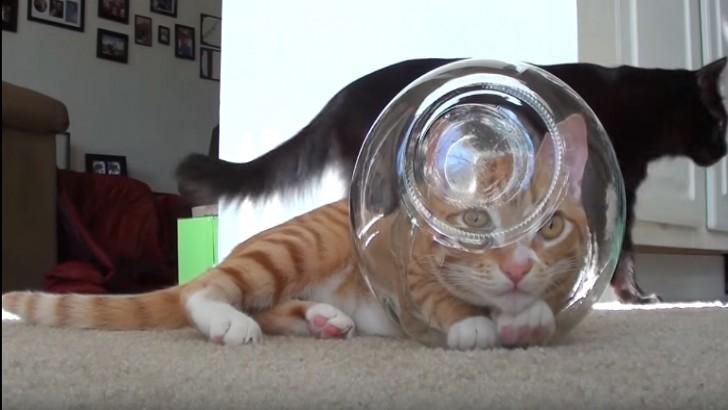 Kedilerin Aslında Uzaylı Olabileceklerini Gösteren 8 İşaret
