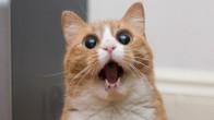 """Kedimiz Şakir'e Deli Gibi Aşık Olmamızın 21 Sebebi """"Kedi Ulaaaaaan!"""""""