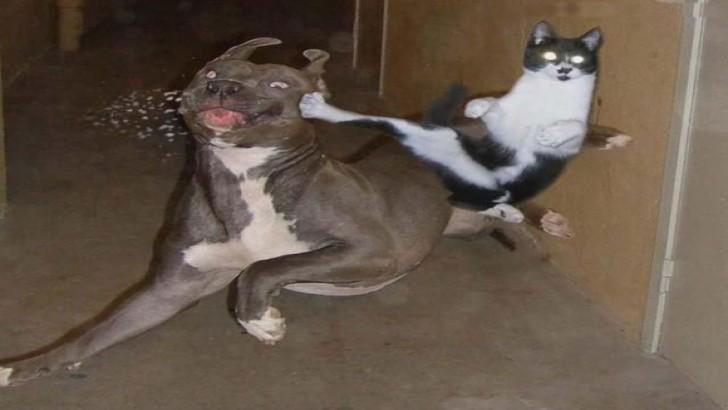 Neden Kedi İle Köpek Anlaşamaz?