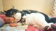 Sarılmayı En Az Bizim Kadar Seven 30 Kedi