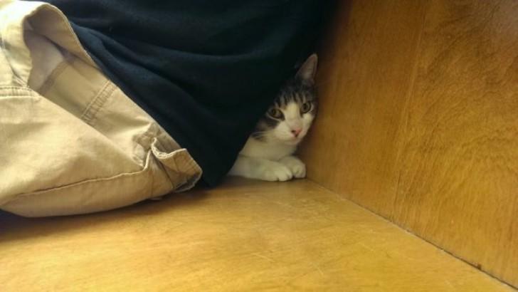 Veteriner Korkusu Yüzünden Bulduğu Her Deliğe Girmeye Razı 18 Tedirgin Kedi