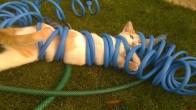Yaptığı Tercihler Yüzünden Duyduğu Pişmanlık Gözlerinden Okunan 18 Kedi