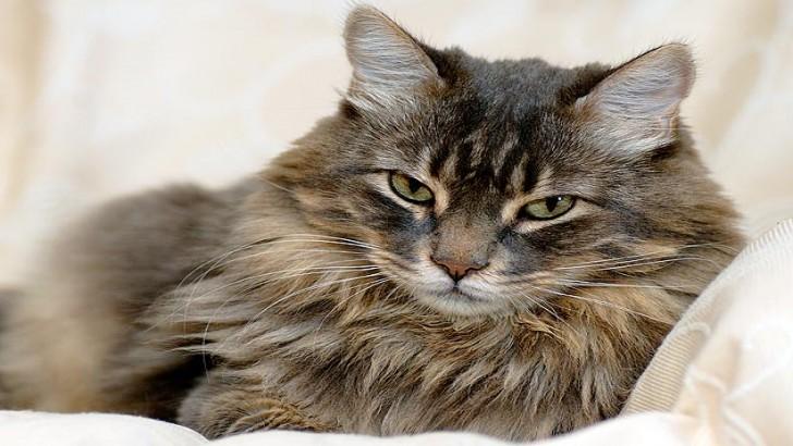 Kedilerden Öğrenmemiz Gereken 17 Hayat Dersi