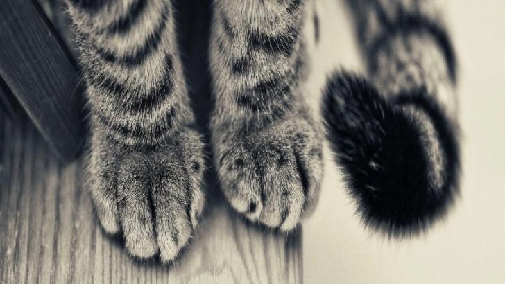 Kedileri Seviyorsanız Bunları da İlla ki Seveceksiniz: Birbirinden Sevimli 24 Pati