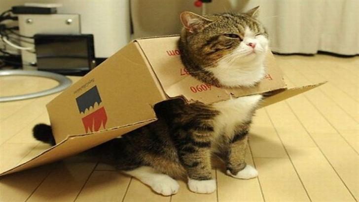 Kedilerin Kutuya Olan Aşkını Gösteren Birbirinden Yumuk 8 Kedi