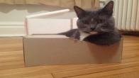 Kedilerin Üstün Güçleri Olduğunun 13 Kanıtı
