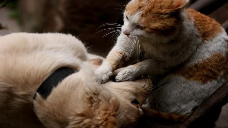 Köpek Kankasına Masaj Yapan 17 Düşünceli Kedi
