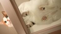 Minik Dostlarımız Kedilerin Her Açıdan Sevimli Olduğunu Kanıtlayan 16 Fotoğraf
