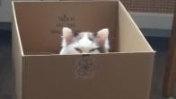 Ruhen ve Bedenen Çoktan Dark Side'a Geçmiş 16 Kötülük Yanlısı Kedi