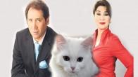 Türkiye'de Bir İlk: Kediye Nafaka!