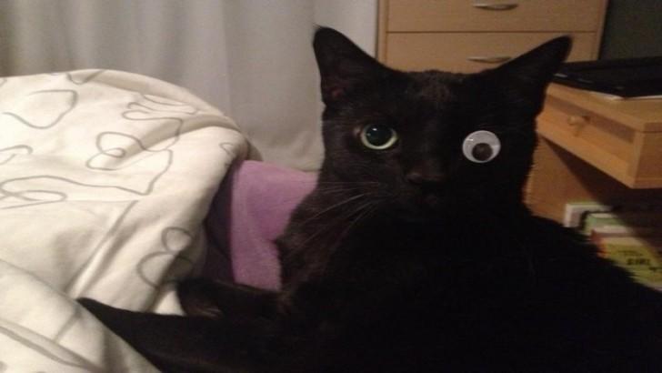 Yaptığı Hatalardan Asla Pişman Olmayan 26 Kedi