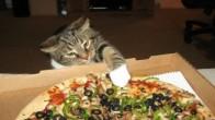 Yemek Yerken Kedi Olduğunu Unutup Kendini İnsan Sanan 30 Kedicik