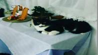 3 bucuk yasindaki kedime ev ariyorum