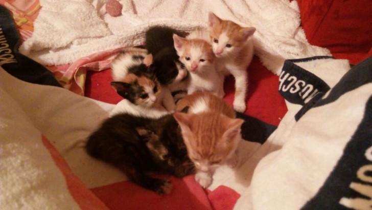 Merhabalar 5 tane bebeklerimiz var anne ile beraber bizimle 2 aylık olmak üzereler yuva arıyoruz