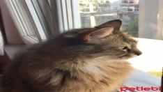 Tatlı Kedimiz Binnaza Yuva Arıyoruz