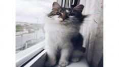 9 aylik kisirlastirilmis disi kedi sahiplendirmek istiyorum