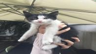 Tam bir kucak kedisi. 3-4 aylık