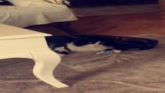 Beşiktaş kedi sahiplendirmek