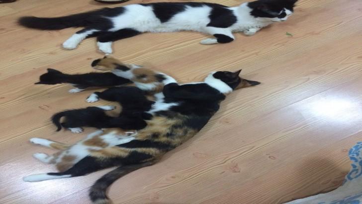 5 tane yavru kedi sahiplendiriyorum.