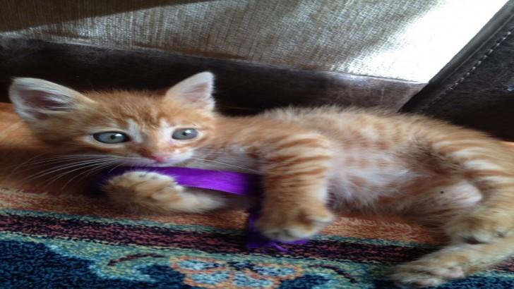 3 aylık yavru kedi için yuva arıyoruz