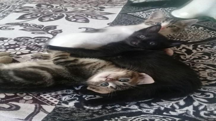 Yavru kediciklere ve anne ile abiyede yuva aranıyor