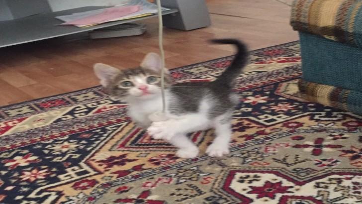Acil minik kedi evsiz