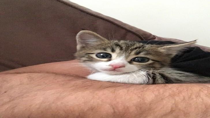 4 aylık dünyalar tatlısı kedi
