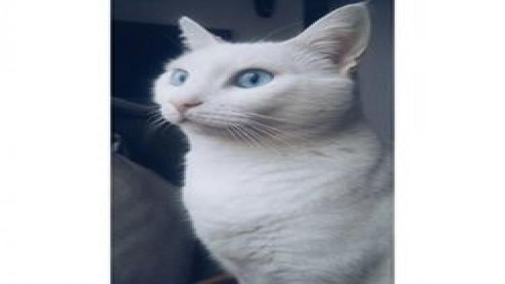 Mavi gözlü Pembe Patili Dünya Tatlısı bir kız