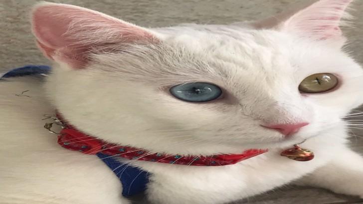 Van Kedisi Hera'ya sıcak bir yuva arıyorum