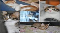 2 aylık kedilere yuva arıyoruz