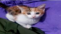 Dünya tatlısı kedimiz Papatya
