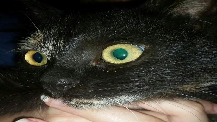 Bursa Yavru Kedi