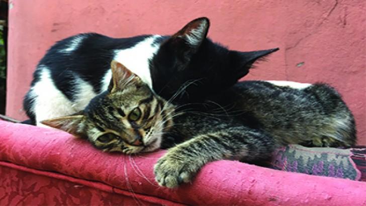 Yavru Kedi ACİL! Sahiplendirme