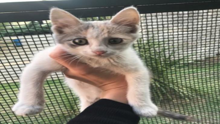 Sağlıklı, iyi huylu 2.5 aylık dişi yavru kedi, AŞILARI TAMAM