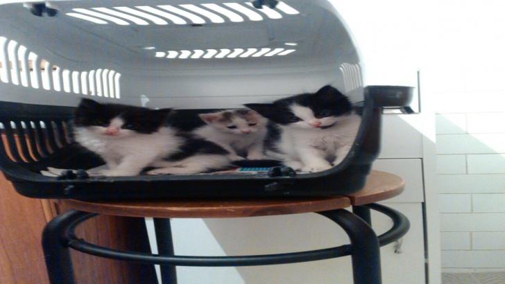 Yavru kedilere yuva